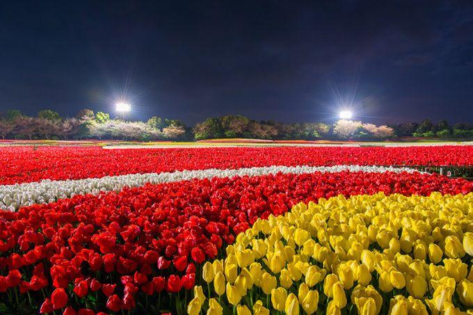 季節限定!花と光の共演も