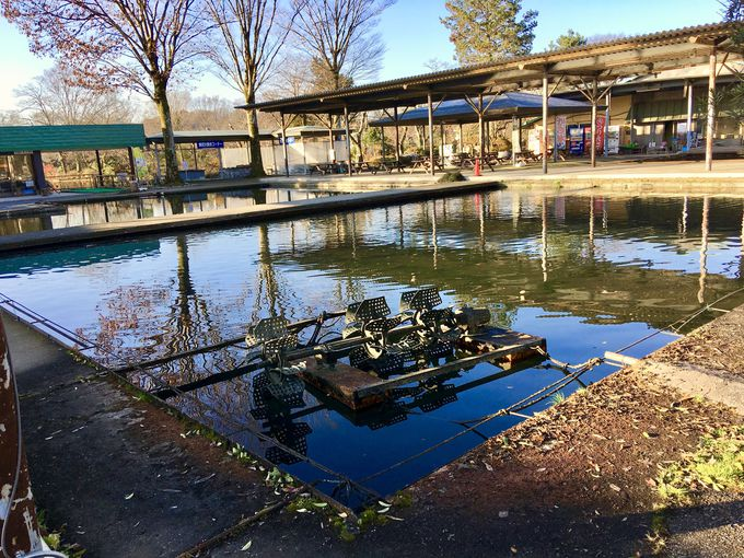 弁天池のお水を使ったお食事やフイッシングフラワーパーク