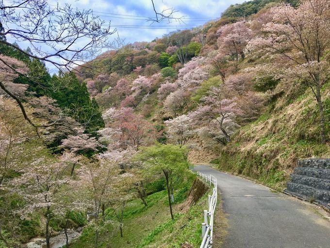 島崎藤村が滞在した客室と吉野山!