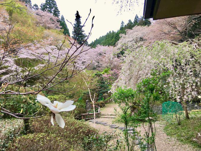 日本庭園に出られる癒しの客室
