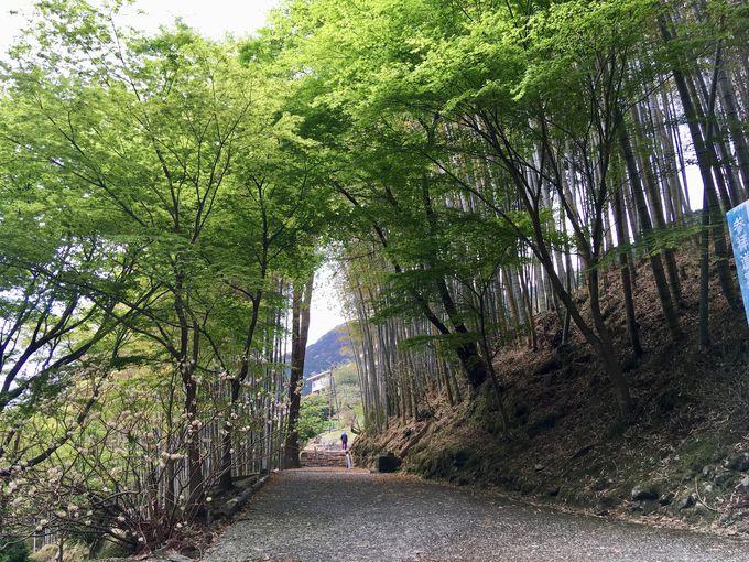 那智滝へ向かって参道を降ろう