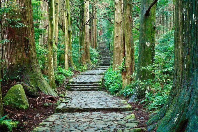 石畳の大門坂から那智山めがけてスタート