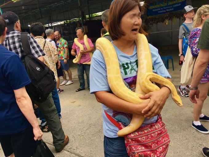 蛇好き必見!そうじゃない人は注意