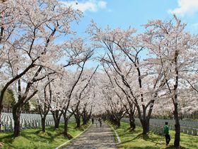 北海道・札幌近郊でお花見をするならここ!梅と桜のお花見名所5選
