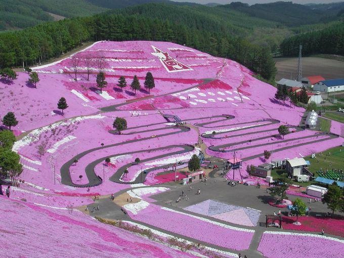 北海道一の大パノラマ・大空町「ひがしもこと芝桜まつり」