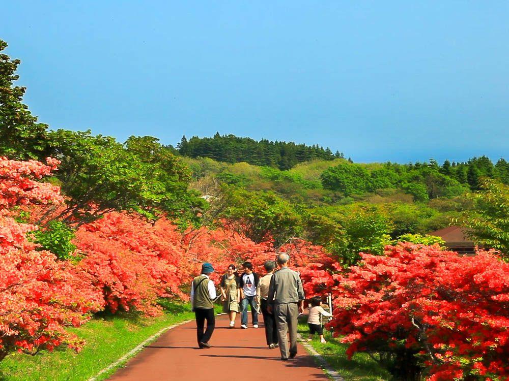 60万本のつつじが美しい 函館「恵山つつじまつり」