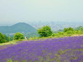 札幌で夏の花ラベンダーを見よう!おすすめ穴場スポット5選