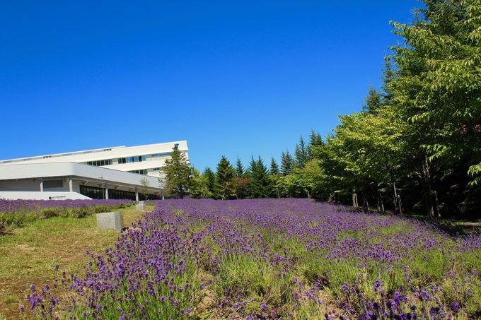 3、東海大学 札幌キャンパス