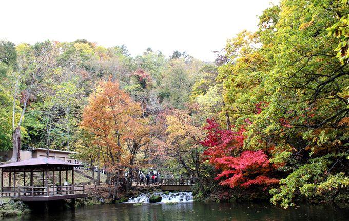 艶やかな水辺の紅葉!