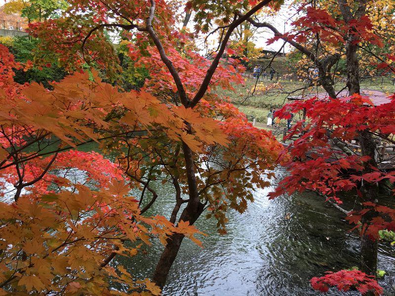紅葉の水辺で癒されよう!北海道京極町「吹き出し公園」