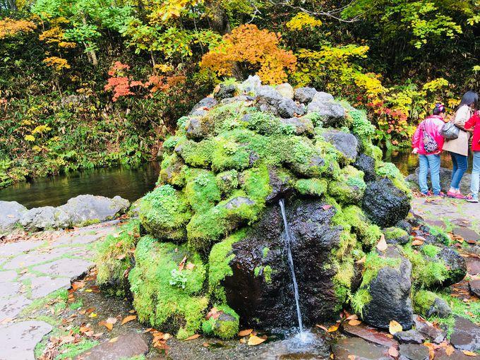 素晴らしい自然が織りなす光景が