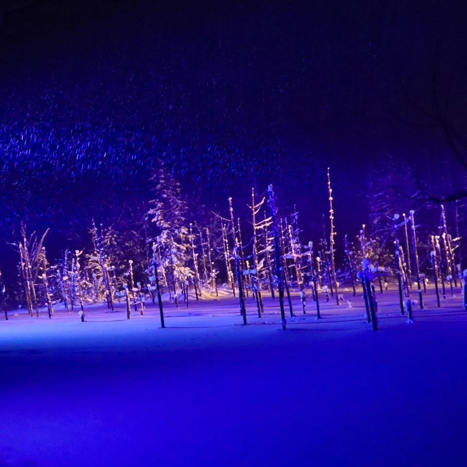 北海道美瑛町「青い池」の絶景!冬景色と夜のライトアップ