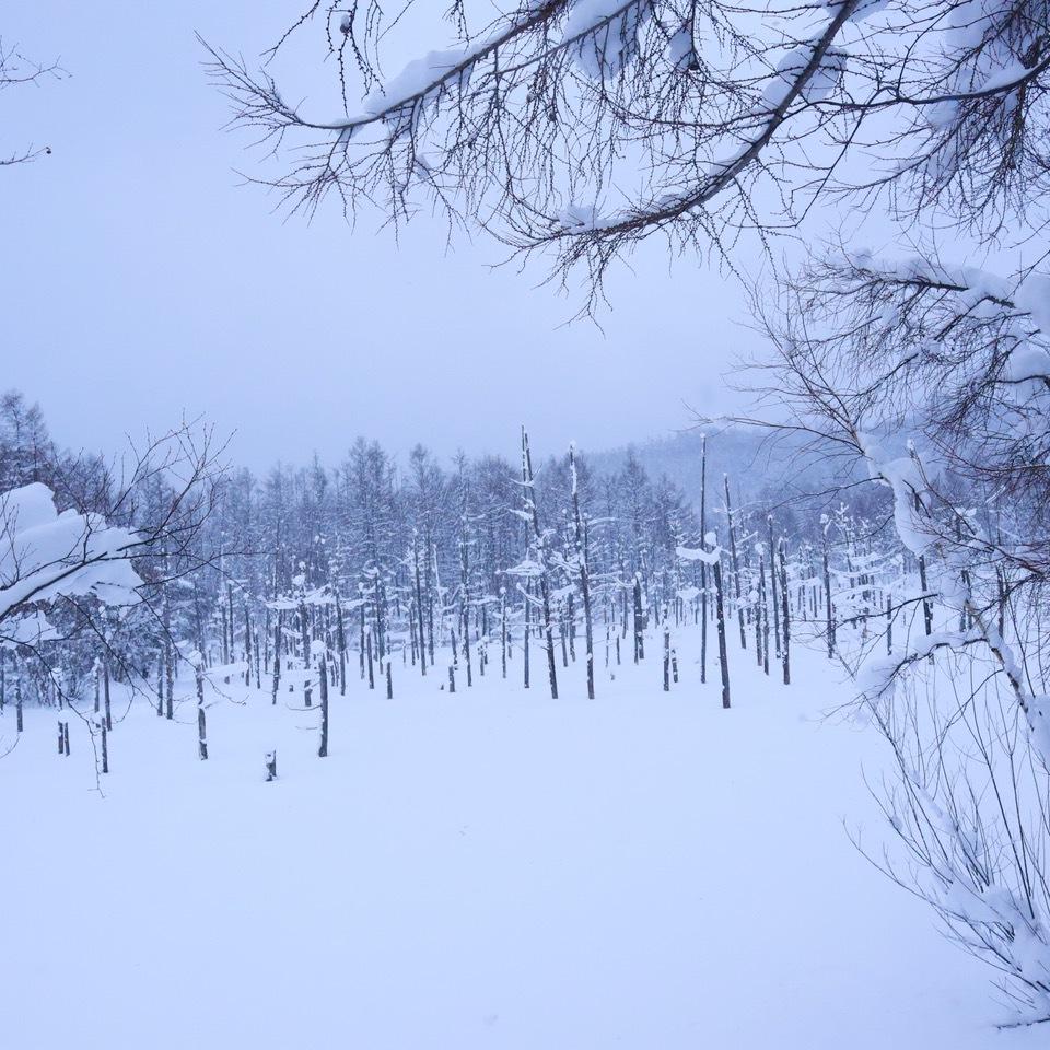 冬の青い池は墨絵のよう!