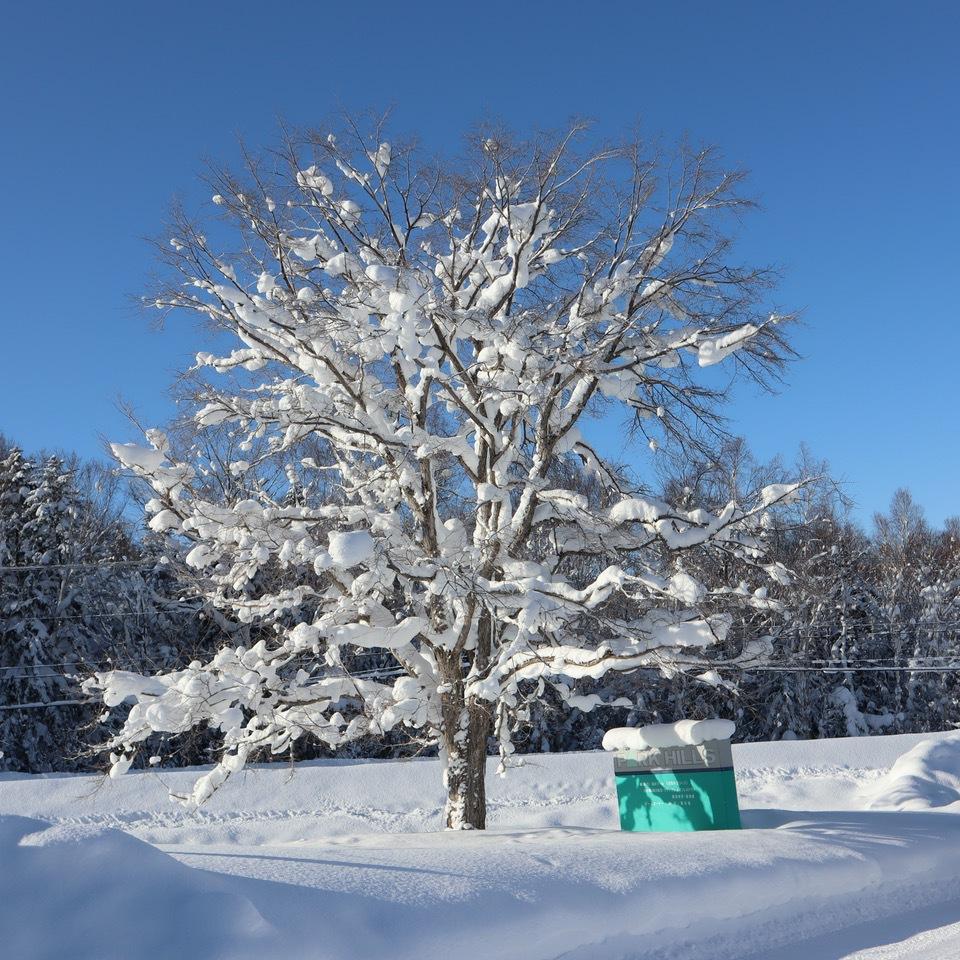 雪景色が美しい!ホテルパークヒルズ