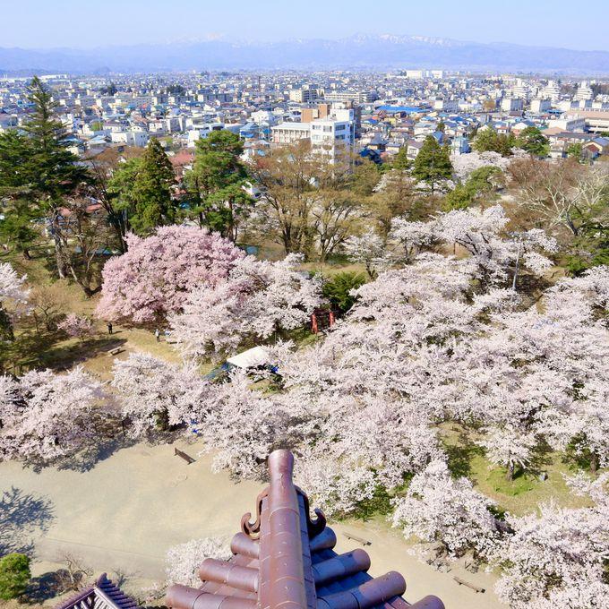 天守閣から桜を眺めてみましょう