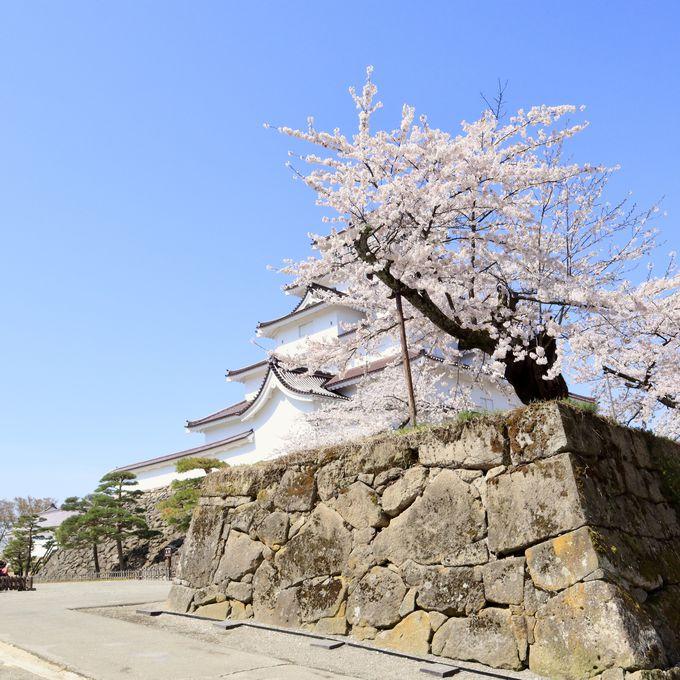 圧巻!赤瓦の天守閣と桜のコラボレーション