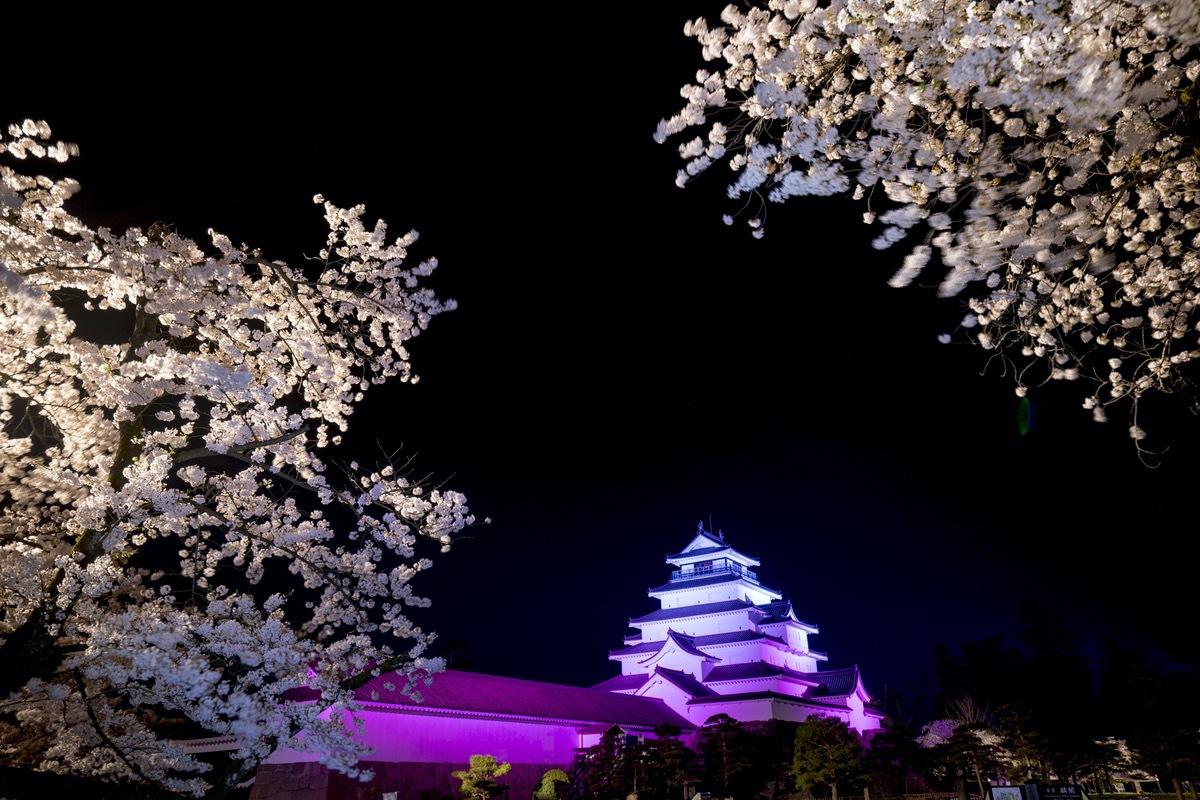絶景夜桜のライトアップも!