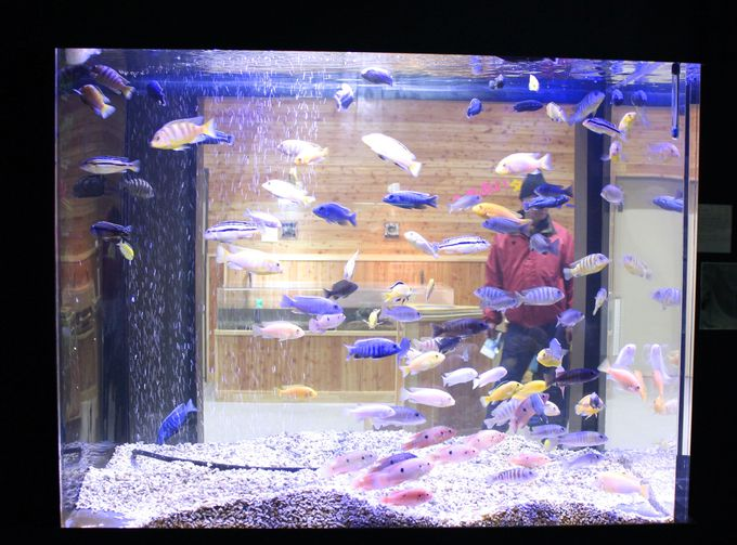 魔法の温泉水で育つ「熱帯ゾーンの魚」