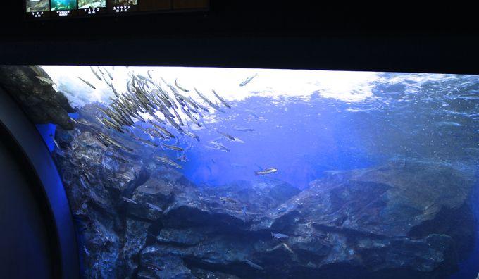 日本初「滝つぼ水槽」と川魚の「ジャンプ水槽」