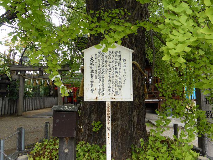 大阪府指定天然記念物