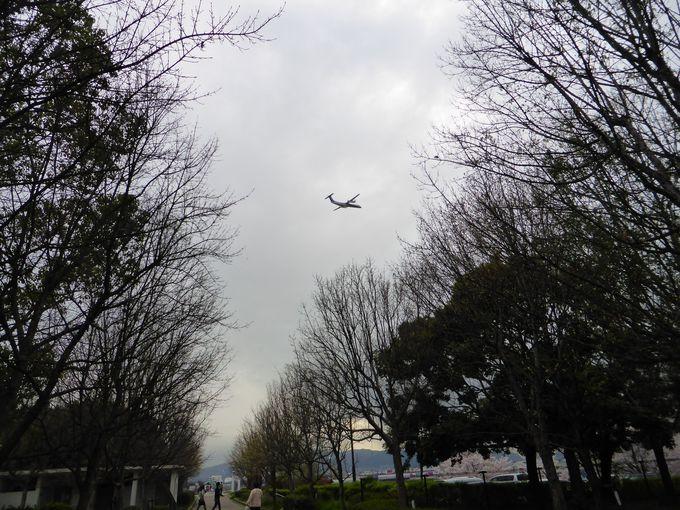 遊びながら離陸する飛行機も見られる