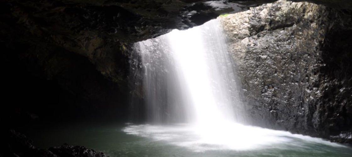 世界最古の森を体感!世界遺産ラミントン国立公園ツアー