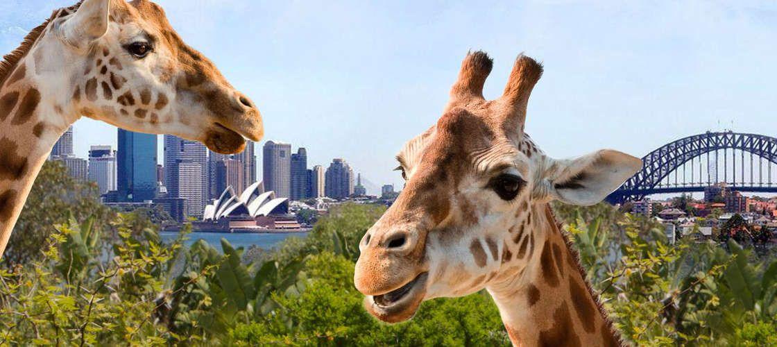 フェリーに乗ってタロンガ動物園