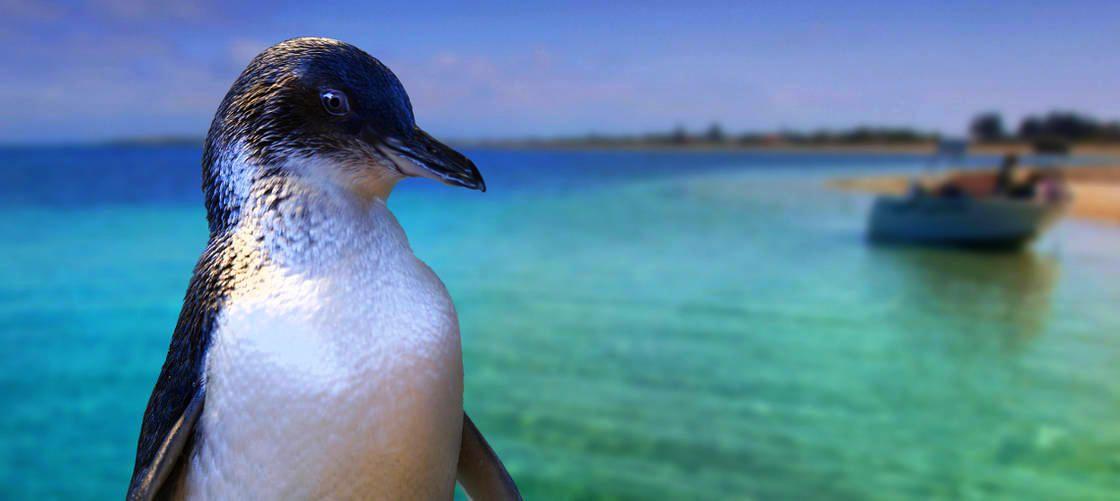 動物たちと間近で触れ合えるペンギン島&1日ワイルドライフツアー