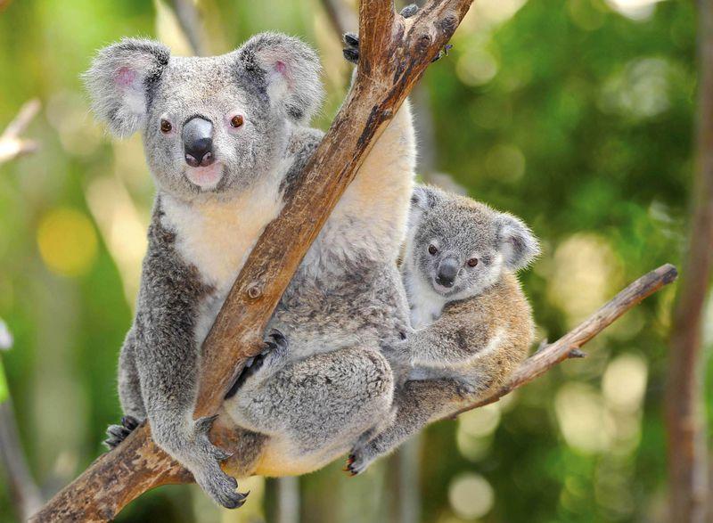 オーストラリアの基本情報まるわかり!旅行お役立ちガイド
