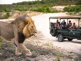 南アフリカ・クルーガー国立公園で夢のサファリ!親子で最高の自由研究を