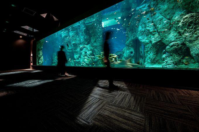 足摺海洋館 SATOUMIとグラスボートで竜串の海を体感