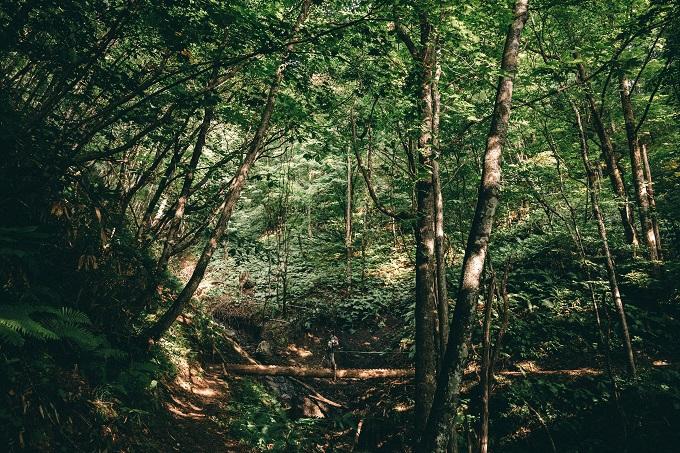 アクティブに動きたい。飛騨高山の森に溶け込む時間