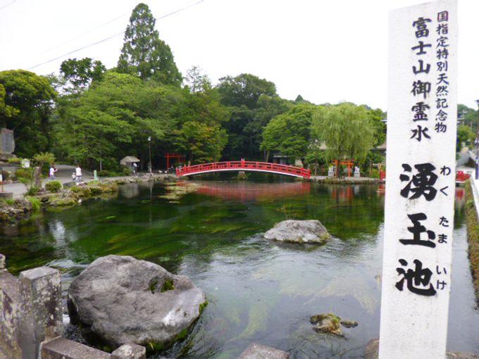 国指定特別天然記念物「湧玉池」は、富士山御霊水が湧き出る清らかな場所