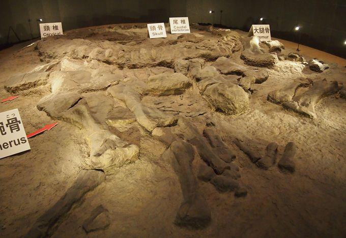 アメリカで発見された全長15mカマラサウルスの産状化石