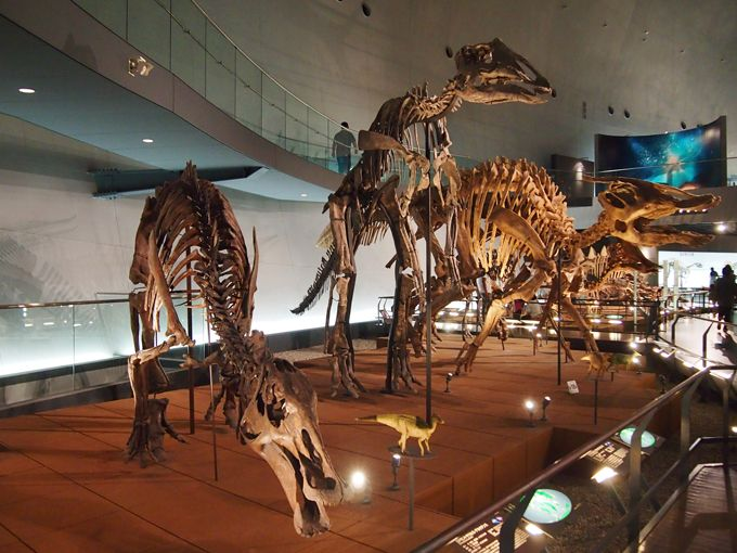 日本で発掘された恐竜化石の大部分は勝山市で発見されたもの!