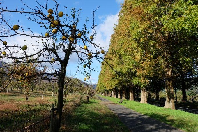 並木横の小路や山並みも美しい!ゆっくり散策を楽しんで。