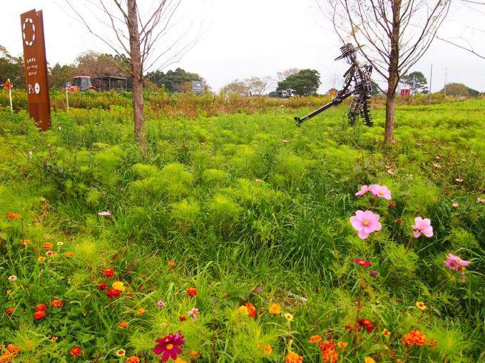 のどかな田園、廃校になった小学校が農と食のテーマパークに!
