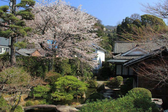 名勝の泉庭、春には桜も