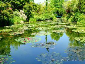 フランス本家が唯一公認!高知県北川村「モネの庭」マルモッタン