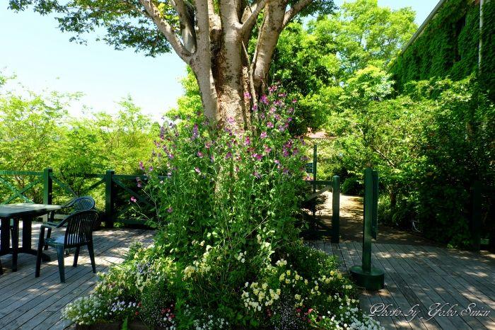 展望デッキ、カフェテラス席からは花の庭を一望