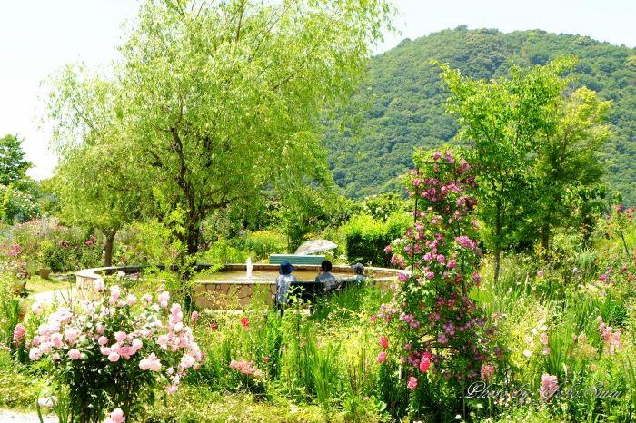 睡蓮だけじゃない!四季折々の花が咲く庭も魅力