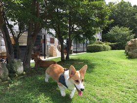 充実のドッグランだけじゃない!伊豆高原「愛犬お宿」はワンコと楽しめる温泉リゾート