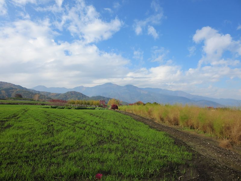 わずか500mに蕎麦屋が9軒も!信州山形村の唐沢そば集落