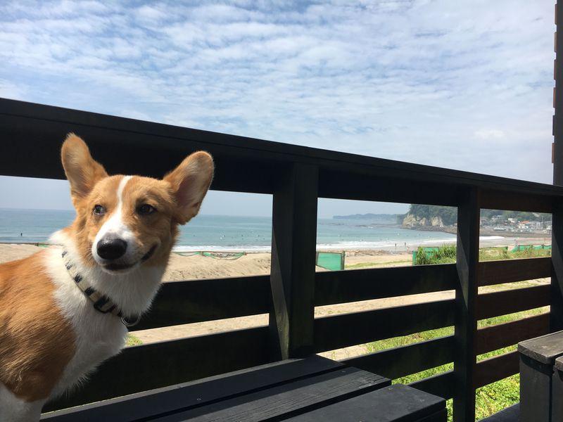 ワンコもにっこり!海岸沿いの素泊まりの宿・外房「御宿ビーチサイド」