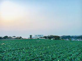 三浦・黒崎の鼻「asora」はキャベツ畑の中の絶景レストラン!