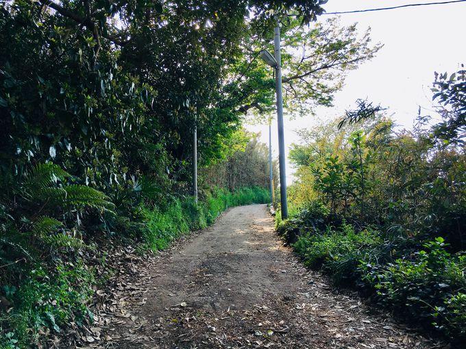 三崎口駅から畑の中の一本道を