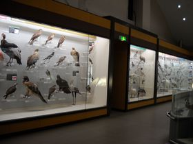 野鳥の宝庫!千葉県我孫子市・手賀沼のほとり「鳥の博物館」で鳥のトリコになってみよう!!