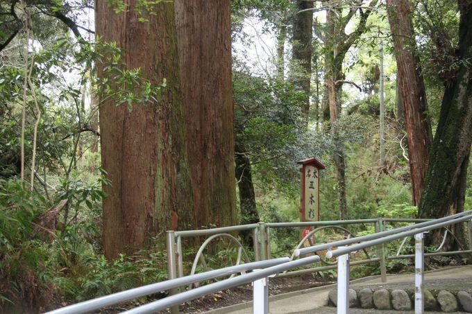 名木・三本杉が悠久のときの流れを語りかけてくる。