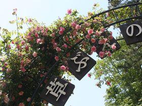 薔薇の香りに誘われて…千葉 佐倉草ぶえの丘バラ園 金賞受賞のバラも!