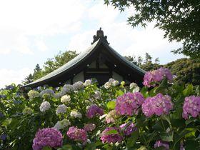 千葉・本土寺は四季花の寺!初夏には、溢れるアジサイを愛でながら安らぎを祈る!
